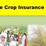 """[Farmers List] Ysr Free Crop Insurance Scheme""""Ap Crop Insurance"""